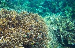 五颜六色的珊瑚礁和霓虹蓝色鱼 海里的风景照片 免版税库存图片
