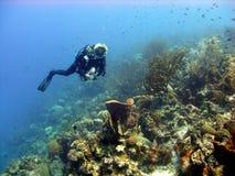 五颜六色的珊瑚礁场面 免版税库存图片