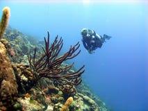 五颜六色的珊瑚礁场面 免版税库存照片