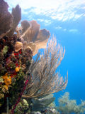 五颜六色的珊瑚礁场面 免版税图库摄影