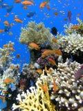 五颜六色的珊瑚礁 免版税库存照片