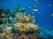 五颜六色的珊瑚礁 图库摄影