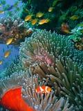 五颜六色的珊瑚鱼礁石 免版税库存图片