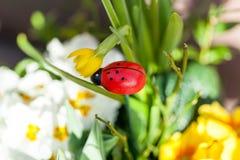 五颜六色的生动的夏天花背景  库存图片