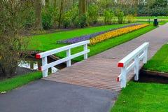 五颜六色的番红花在春天庭院里开花开花 图库摄影