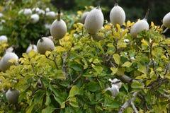 五颜六色的白花在植物园里在开普敦在南非 免版税图库摄影