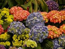 五颜六色的百万朵花 免版税库存照片