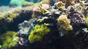 五颜六色的盐水珊瑚礁特写镜头  影视素材