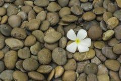 五颜六色的石头和白花 图库摄影