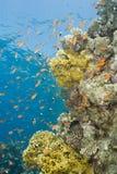 五颜六色的礁石场面热带充满活力 免版税库存图片