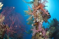 五颜六色的礁石场面热带充满活力 库存图片