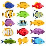 五颜六色的礁石热带鱼集合 免版税库存照片