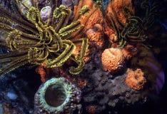五颜六色的礁石 库存照片