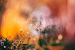 五颜六色的神仙的梦想的不可思议的黄色红色花模糊的背景 图库摄影