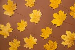 五颜六色的秋叶创造性的布局  平的位置 免版税图库摄影