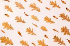 五颜六色的秋叶创造性的布局  平的位置 库存图片