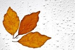 五颜六色的秋叶和雨珠在窗口 库存照片