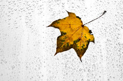 五颜六色的秋叶和雨珠在窗口 库存图片
