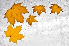 五颜六色的秋叶和雨珠在窗口 免版税图库摄影