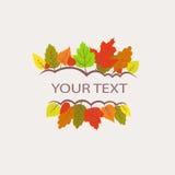 五颜六色的秋叶商标 免版税库存图片