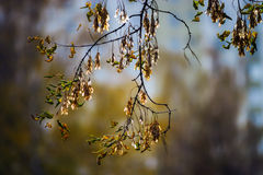 五颜六色的秋叶在10月公园 免版税库存图片