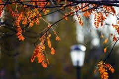 五颜六色的秋叶在10月公园 库存照片