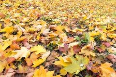 五颜六色的秋叶地毯  库存图片