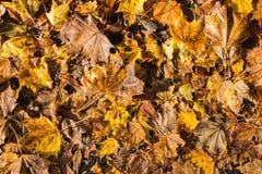 五颜六色的秋叶安排13 库存图片