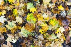 五颜六色的秋叶安排15 免版税库存图片