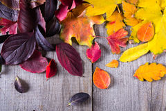 五颜六色的秋叶抽象背景  库存照片