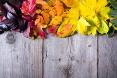 五颜六色的秋叶抽象背景  免版税库存图片