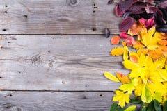 五颜六色的秋叶抽象背景  免版税库存照片