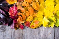 五颜六色的秋叶抽象背景  图库摄影