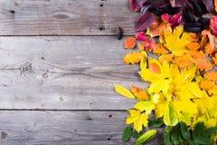 五颜六色的秋叶抽象背景  库存图片