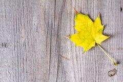 五颜六色的秋叶抽象背景  免版税图库摄影