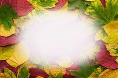 五颜六色的秋叶框架写的文本 图库摄影