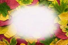 五颜六色的秋叶框架写的文本 免版税库存照片