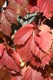 五颜六色的秋叶的特写镜头图象 库存照片
