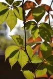 五颜六色的秋叶的特写镜头图象 免版税库存照片