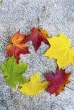 五颜六色的秋叶美丽的花圈  免版税库存照片