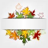 五颜六色的秋叶背景传染媒介 库存照片