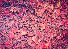 五颜六色的秋叶背景在森林地板上的 使用葡萄酒过滤器 库存照片