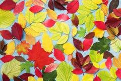 五颜六色的秋叶背景顶视图 明亮的秋天样式 库存照片
