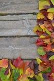 五颜六色的秋叶边界在木头的 库存照片