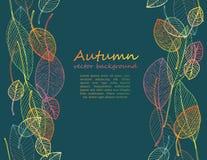五颜六色的秋叶边界框架 库存图片
