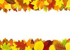 五颜六色的秋叶边界 库存图片