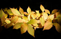 五颜六色的秋叶 免版税库存照片