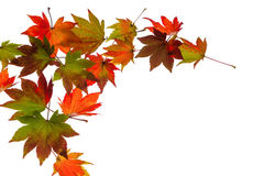五颜六色的秋叶 图库摄影