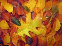 五颜六色的秋叶 库存照片