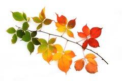 五颜六色的秋叶 免版税库存图片